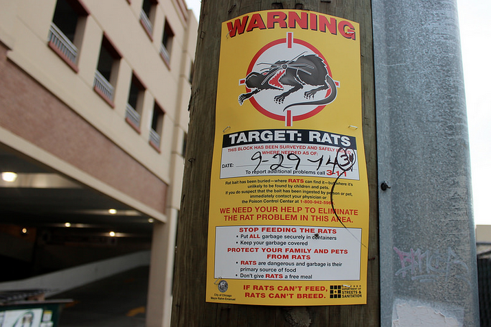 """Bright yellow signs warning residents of rats are posted throughout Rogers Park. According to a list compiled by Orkin, a pest control company, Chicago holds the top spot for """"rattiest city."""""""