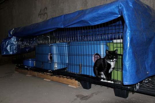 Feral cats, a type of stray cat unable to live a domesticated lifestyle that are usually euthanized, have been placed in the dock area to help with the rat problems as a part of the Tree House Humane Society's Cats Work program.